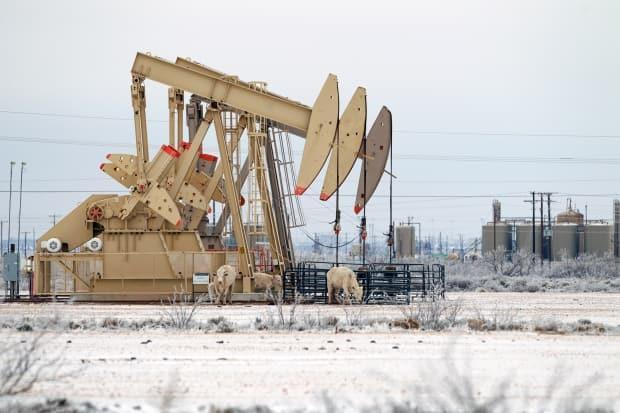 Cattle find shelter from the cold wind on the side of a pump jack array last weekend in Midland, Texas. A historic winter storm plunged the state's energy sector into a deep freeze that saw oil prices jump.