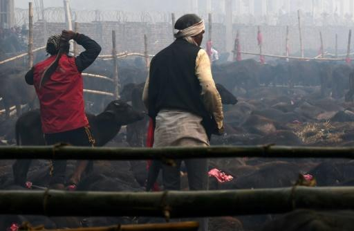 An estimated 200,000 animals�ranging from goats to rats were butchered�during the last two-day Gadhimai Festival in 2014