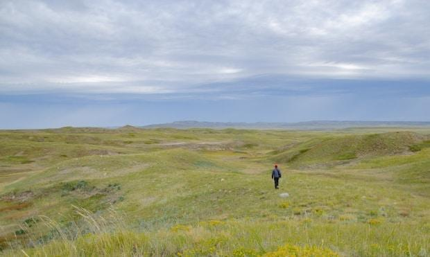 A coalition of Indigenous, agricultural and environmental groups is calling for the Saskatchewan government to stop the sale of Crown land.  (Kendall Latimer/CBC - image credit)