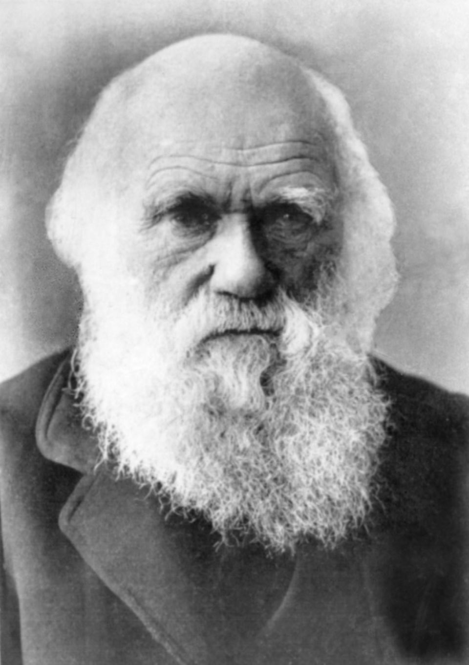 "Speaking of eating odd animals, the ""Father of Evolution,"" <strong>Charles Darwin</strong>, always had a taste for unusual cuisine—he was even a member of The Glutton Club while a student at Cambridge University. And according to <em>io9</em>, ""He <a href=""https://io9.gizmodo.com/what-did-charles-darwin-put-in-his-mouth-pretty-much-e-1687788345"" rel=""nofollow noopener"" target=""_blank"" data-ylk=""slk:ate the iguanas he studied"" class=""link rapid-noclick-resp"">ate the iguanas he studied</a> on the Galapagos. He ate armadillo, which he claimed tasted like duck. He ate puma. The lesser rhea, known to scientists as <em>Rhea darwinii</em>, got its name because Darwin sent the few bits of it he hadn't eaten to London."" According to <em>Foodbeast</em>, the <a href=""https://www.foodbeast.com/news/charles-darwin-eating-habits/"" rel=""nofollow noopener"" target=""_blank"" data-ylk=""slk:scientist had been enjoying"" class=""link rapid-noclick-resp"">scientist had been enjoying</a> the large flightless rhea bird for Christmas dinner."