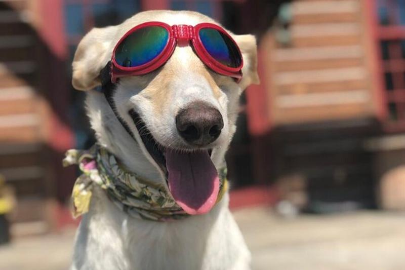 'Dogs in Goggles' is a Real Thing and Here's Why the Internet is Going Crazy