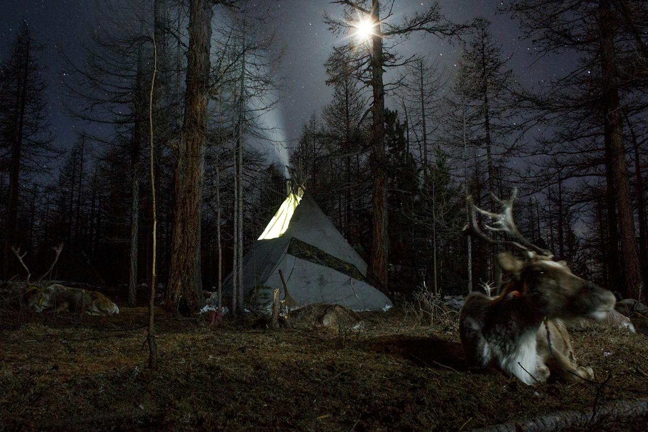 "Smoke rises from the chimney of the family tent of Dukha herder Erdenebat Chuluu in a forest near the village of Tsagaannuur, Khovsgol aimag, Mongolia, April 21, 2018. ""We wake up and have breakfast then release the reindeer. We herd them and at twelve o'clock we make them come back. Then while they are tied up, I chop some wood and do some other chores. I then relax for an hour or so. Later I release the reindeer again and around seven or eight o'clock I bring them back and tie them up again. By then, the woman of the family would have prepared some food, so this is how we spend our day,"" Chuluu said. REUTERS/Thomas Peter    SEARCH ""REINDEER HERDERS"" FOR THIS STORY. SEARCH ""WIDER IMAGE"" FOR ALL STORIES. TPX IMAGES OF THE DAY"