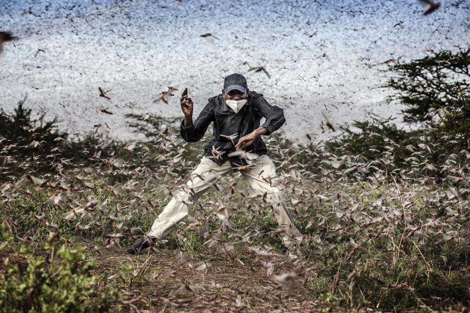 In this image released by World Press Photo, Thursday April 15, 2021, by Luis Tato for The Washington Post, part of a series titled Locust Invasion in East Africa which won third prize in the Nature Stories category, shows Henry Lenayasa, chief of the settlement of Archers Post, in Samburu County, Kenya, tries to scare away a massive swarm of locusts ravaging grazing area, on 24 April 2020. Locust swarms devastated large areas of land, just as the coronavirus outbreak had begun to disrupt livelihoods. (Luis Tato for The Washington Post, World Press Photo via AP)