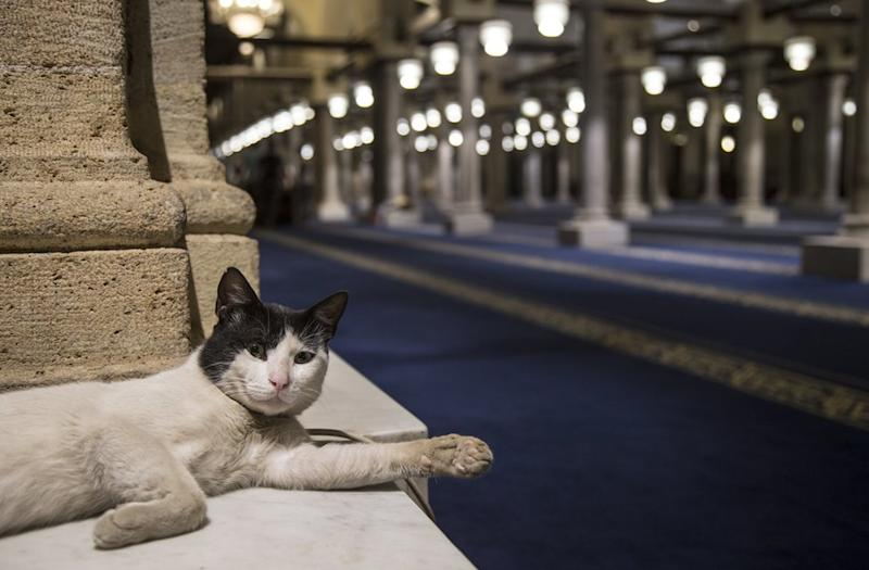 A cat stretches out one paw as it lays down in a mosque.