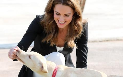 The Duchess of Cambridge meets a golden labrador puppy training to find IEDs - Credit: Getty