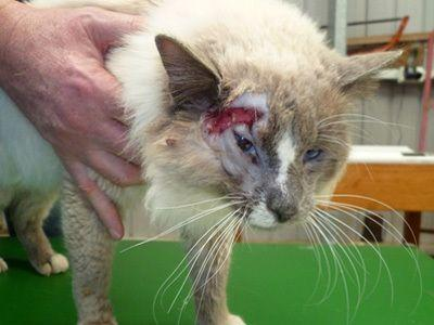 Rspca Warns Over Diseased Cats For Sale