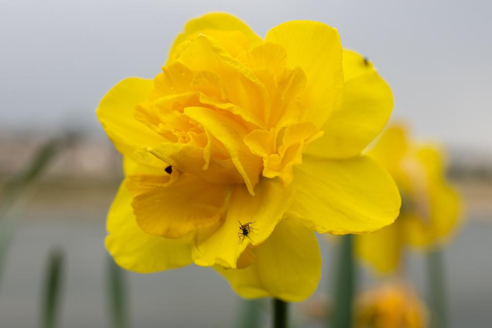 <p>Sony A1 pro photographer sample gallery</p>