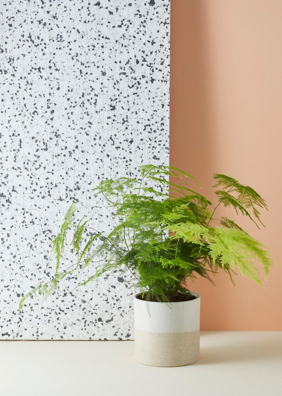 "<strong><h3>Geo-Fleur</h3></strong><br>We've been eyeing this London-based indoor plant brand's collection of chic perennials — ranging from <a href=""https://www.trouva.com/boutique/geo-fleur-in-e152er/asparagus-fern-house-plant-7621"" rel=""nofollow noopener"" target=""_blank"" data-ylk=""slk:asparagus ferns"" class=""link rapid-noclick-resp"">asparagus ferns</a> to rare ""<a href=""https://www.trouva.com/boutique/geo-fleur-in-e152er/monstera-obliqua-very-rare-house-plant"" rel=""nofollow noopener"" target=""_blank"" data-ylk=""slk:Swiss cheese plants"" class=""link rapid-noclick-resp"">Swiss cheese plants</a>"" — for some time now. Fortunately, we've found a workaround to get these plants stateside: The brand is stocked at <a href=""https://www.trouva.com/"" rel=""nofollow noopener"" target=""_blank"" data-ylk=""slk:Trouva"" class=""link rapid-noclick-resp"">Trouva</a>, an online boutique that ships to the U.S. for $16.76.<br><br><em>Visit <a href=""https://www.trouva.com/boutique/geo-fleur-in-e152er"" rel=""nofollow noopener"" target=""_blank"" data-ylk=""slk:Geo-Fleur"" class=""link rapid-noclick-resp"">Geo-Fleur</a>.</em><span class=""copyright"">Photo: Courtesy of Geo Fleur.</span>"