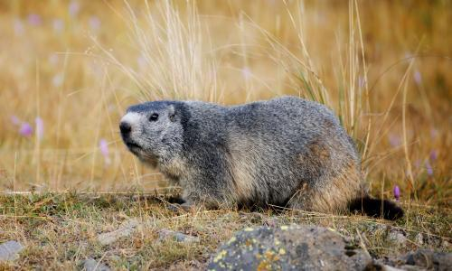 Groundhogs to blame for scattered bones in Canada's biggest cemetery
