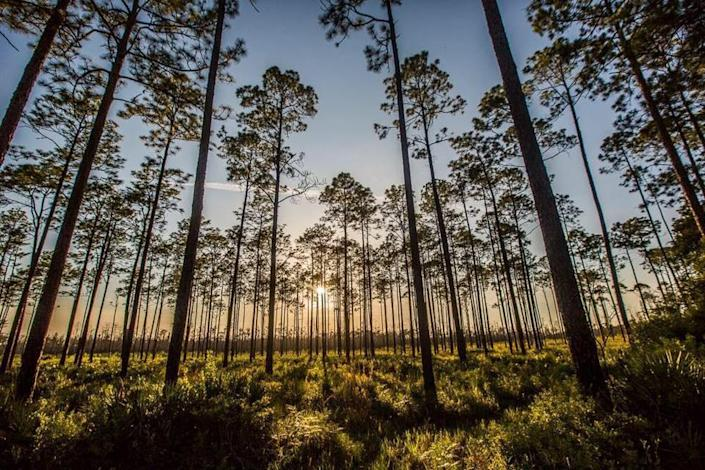 The company applying for permits to mine for titanium and other minerals near the Okefenokee National Wildlife Refuge doesn't control about a quarter of the land it said it did in recent requests to state and federal regulators.