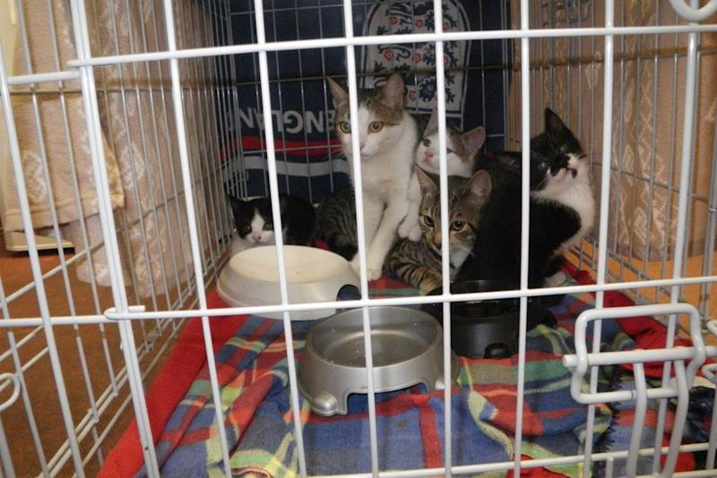 Cats found abandoned in box