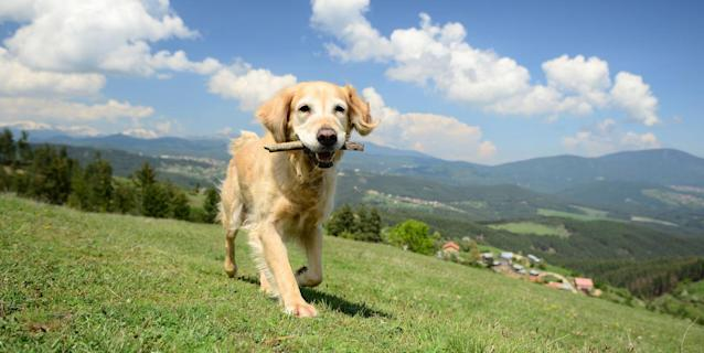 Dream dog job alert! Travel company is looking for 10