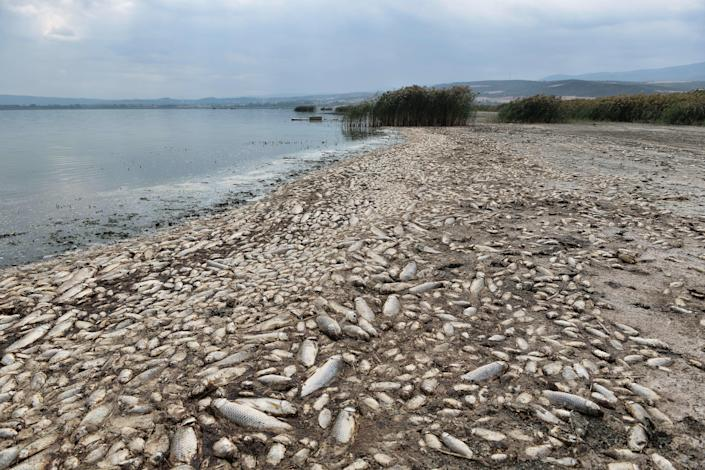 Thousands of dead freshwater fish are seen around Lake Koroneia, Greece, on September 19, 2019.  / Credit: SAKIS MITROLIDIS/AFP via Getty Images