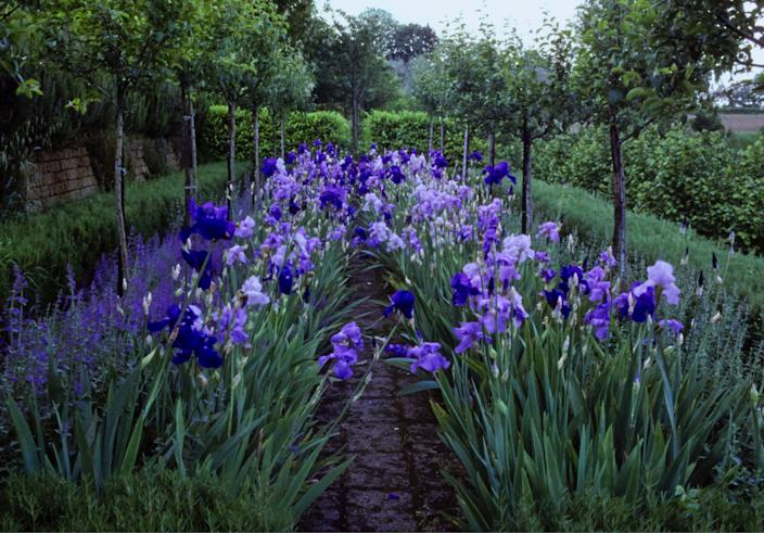 """<div class=""""caption""""> An Allée of malus red sentinel trees underplanted with nepeta and pacific panorama and intriguer irises. </div> <cite class=""""credit"""">Guido Taroni </cite>"""