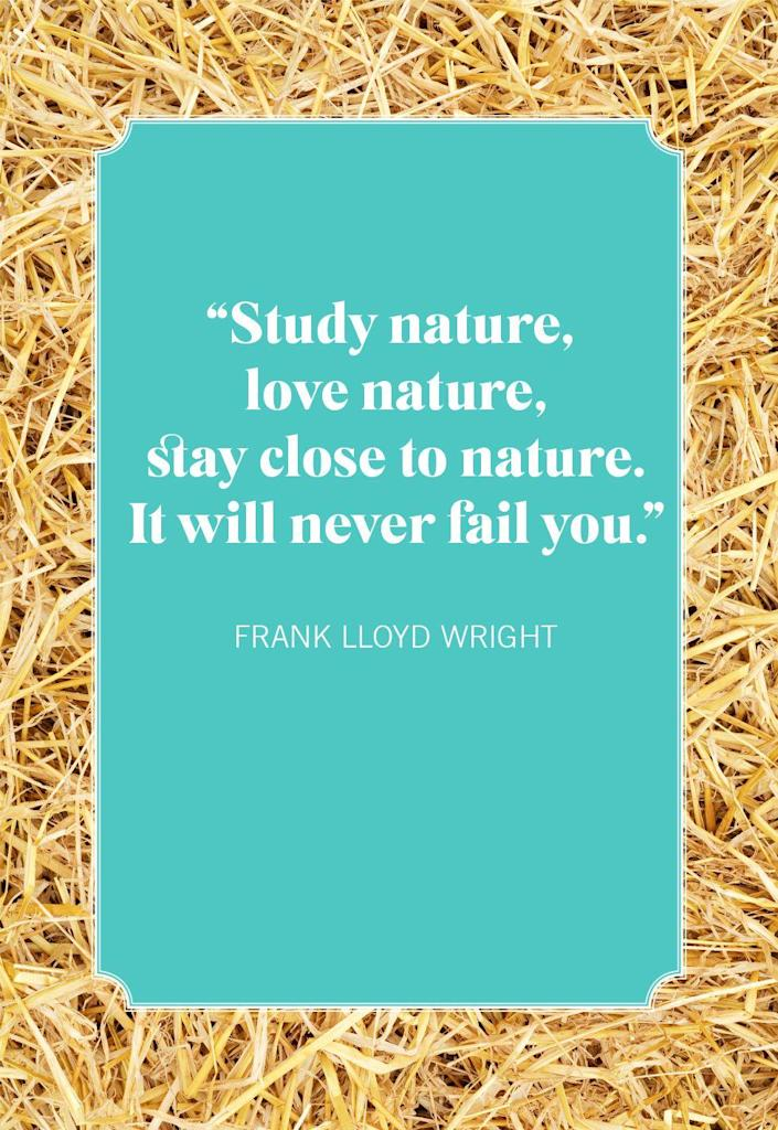 """<p>""""Study nature, love nature, stay close to nature. It will never fail you.""""</p>"""