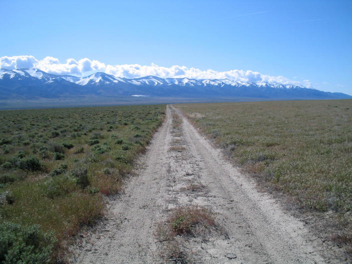 This 2005 photo provided by Bethany Bradley shows cheatgrass, at right, invading shrubs, left, near Lovelock, Nev. A new study finds that for much of the United States, invasive grass species, such as cheatgrass, are making wildfires more frequent, especially in fire-prone California. (Bethany Bradley/University of Massachusetts via AP)
