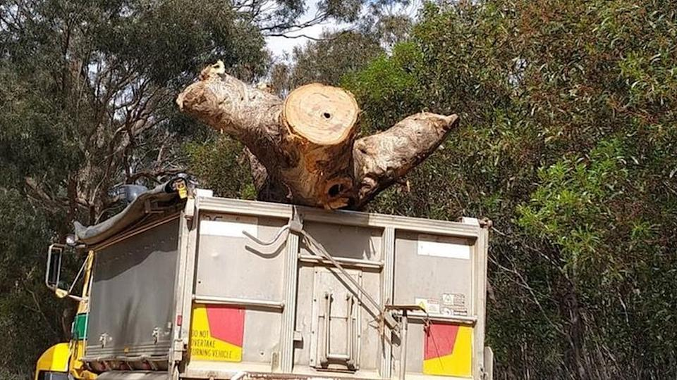 """Activist-supplied image of the cut-down """"Directions Tree"""" in a truck"""