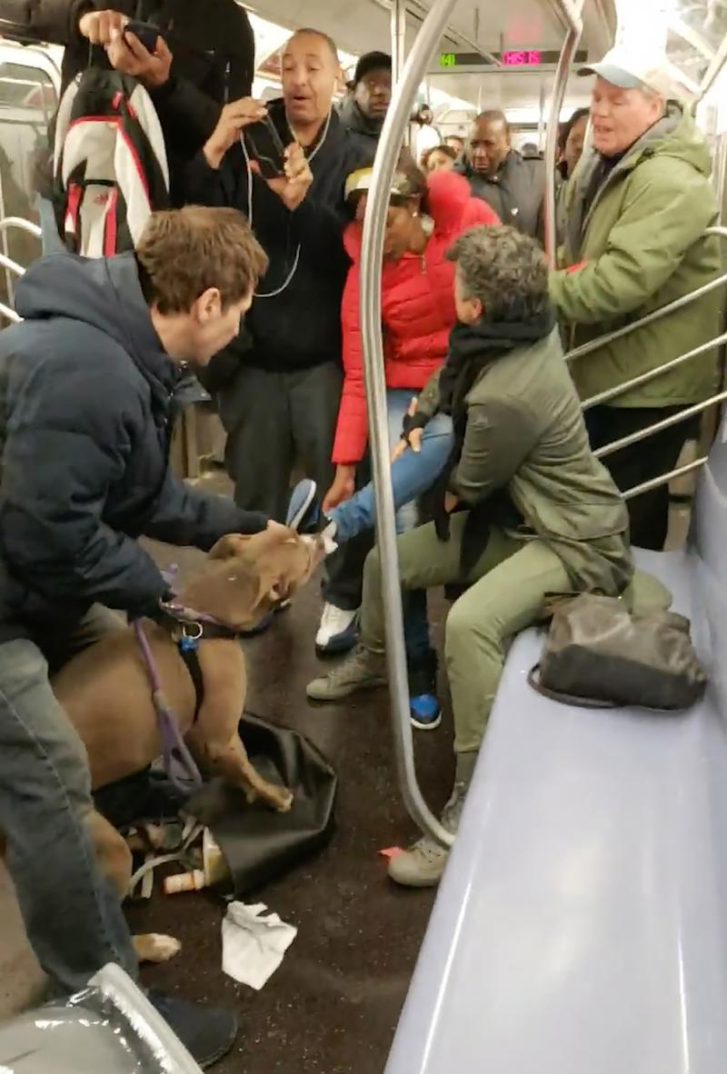 WATCH: Pit Bull Attacks Woman on New York City Subway — and Police Are Investigating