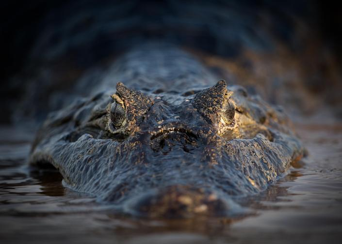 A tenth of the Pantanal has been destroyed according to some estimates - getty
