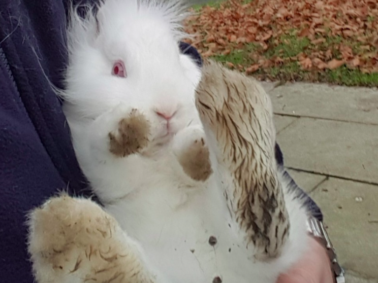 Rescued: Fortunately the rabbit hadn't suffered any injuries (RSPCA)