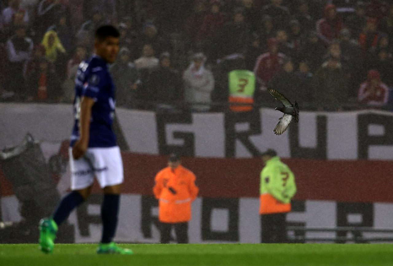 Football Soccer - Argentina's River Plate v Bolivia's Jorge Wilstermann – Copa Libertadores - Antonio Vespucio Liberti stadium, Buenos Aires, Argentina September 21, 2017. A bird flies during the match.   REUTERS/Agustin Marcarian