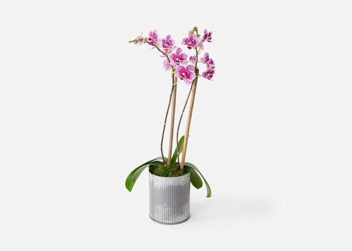 """<p>urbanstems.com</p><p><strong>$60.00</strong></p><p><a href=""""https://go.redirectingat.com?id=74968X1596630&url=https%3A%2F%2Furbanstems.com%2Fproducts%2Fplants%2Fthe-skye%2FNF-PLNT-00006.html&sref=https%3A%2F%2Fwww.townandcountrymag.com%2Fstyle%2Fg2095%2Fmothers-day-gift-ideas%2F"""" rel=""""nofollow noopener"""" target=""""_blank"""" data-ylk=""""slk:Shop Now"""" class=""""link rapid-noclick-resp"""">Shop Now</a></p><p>Gift her an exquisite orchid that she will nurture and spend weeks admiring. </p><p><strong>More:</strong> <a href=""""https://www.townandcountrymag.com/style/home-decor/g35459276/best-online-plant-delivery-services/"""" rel=""""nofollow noopener"""" target=""""_blank"""" data-ylk=""""slk:The Best Places to Order Plants Online"""" class=""""link rapid-noclick-resp"""">The Best Places to Order Plants Online</a></p>"""