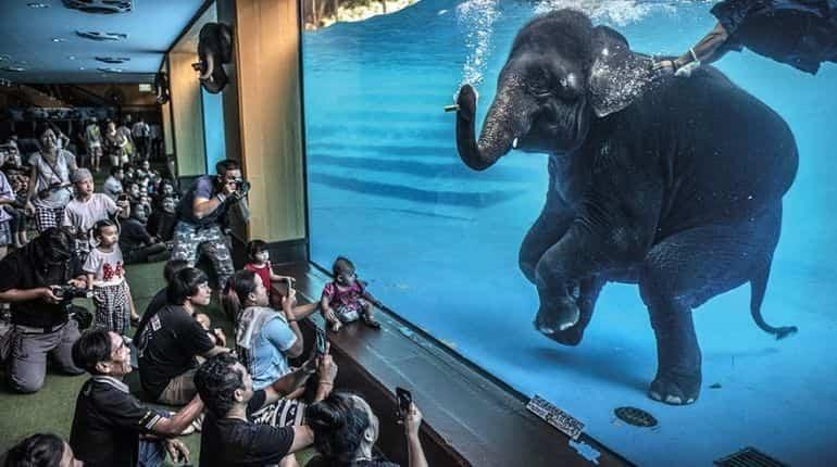 Wildlife photographer of the year 2021- Elephant in the room