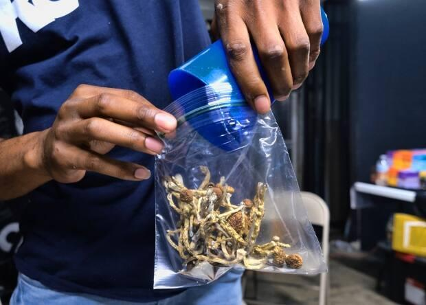 A vendor bags psilocybin mushrooms at a pop-up cannabis market in Los Angeles in May 2019. Though illegal in Canada since the 1970s, recent exemptions have been granted for its use in psychotherapy. (Richard Vogel/The Associated Press - image credit)
