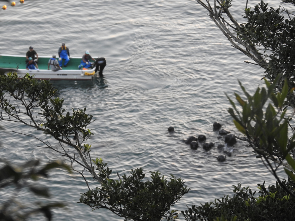 A skiff with five men on it look at a pod of pilot whales huddled together.