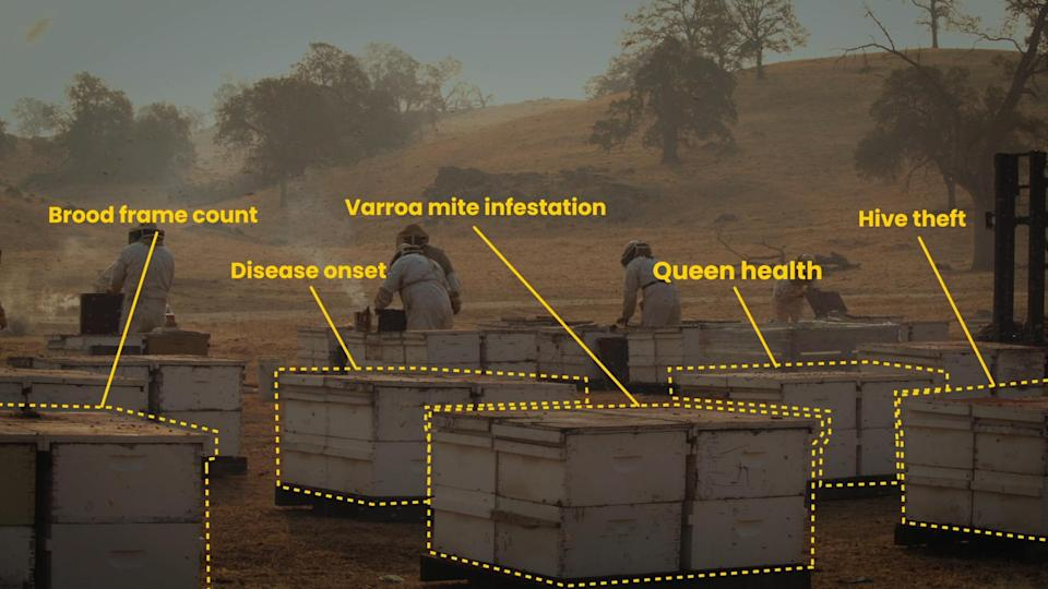 Beehives illustrated with labels describing problems they might be facing, like mites.