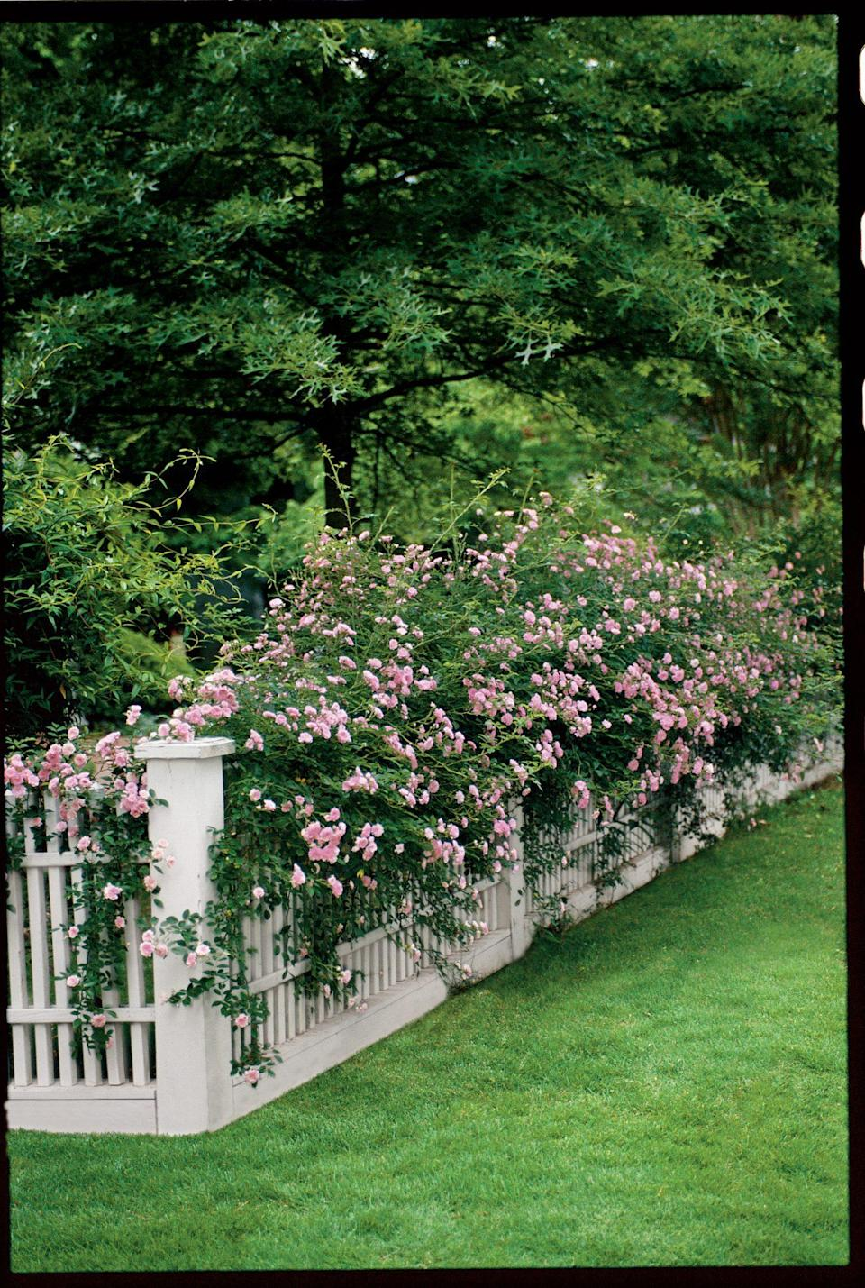 """<p>It doesn't matter what your architecture style is, every house can use <a href=""""https://www.southernliving.com/garden/flowers/climbing-roses"""" rel=""""nofollow noopener"""" target=""""_blank"""" data-ylk=""""slk:a little cottage charm"""" class=""""link rapid-noclick-resp"""">a little cottage charm</a>—and a climbing rose trailing around your mailbox is a surefire way to get it. If you want lots of flowers, choose either a 'New Dawn,' 'Cecile Brunner,' or 'Climbing Old Blush' variety. They'll bloom from spring through fall. If your mailbox receives sun all day long, a climbing rose will be relatively easy to grow and reward you with plenty of pretty blooms. </p>"""