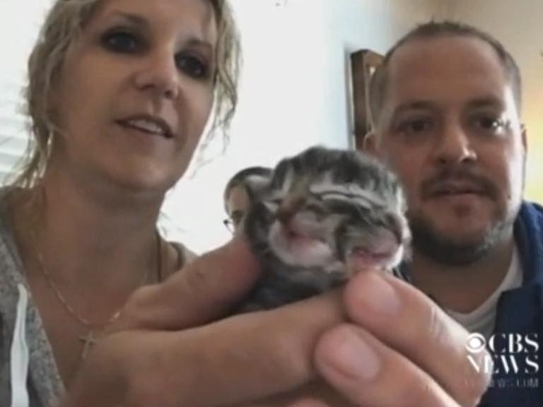 A kitten with two faces, named Biscuits and Gravy, was born in Oregon: CBS News