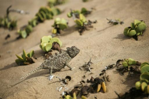 <p>Iran military official: West used lizards for nuclear spying</p>