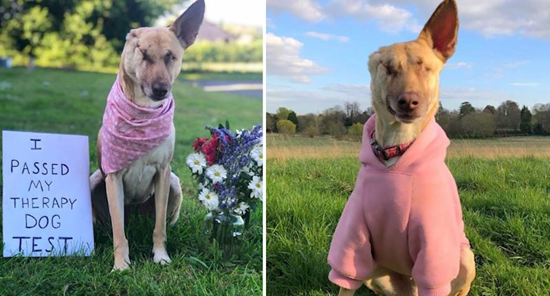"""Photos of Maggie who has embraced her new life as a """"Cute Happy Disabled Rescue Dog""""."""