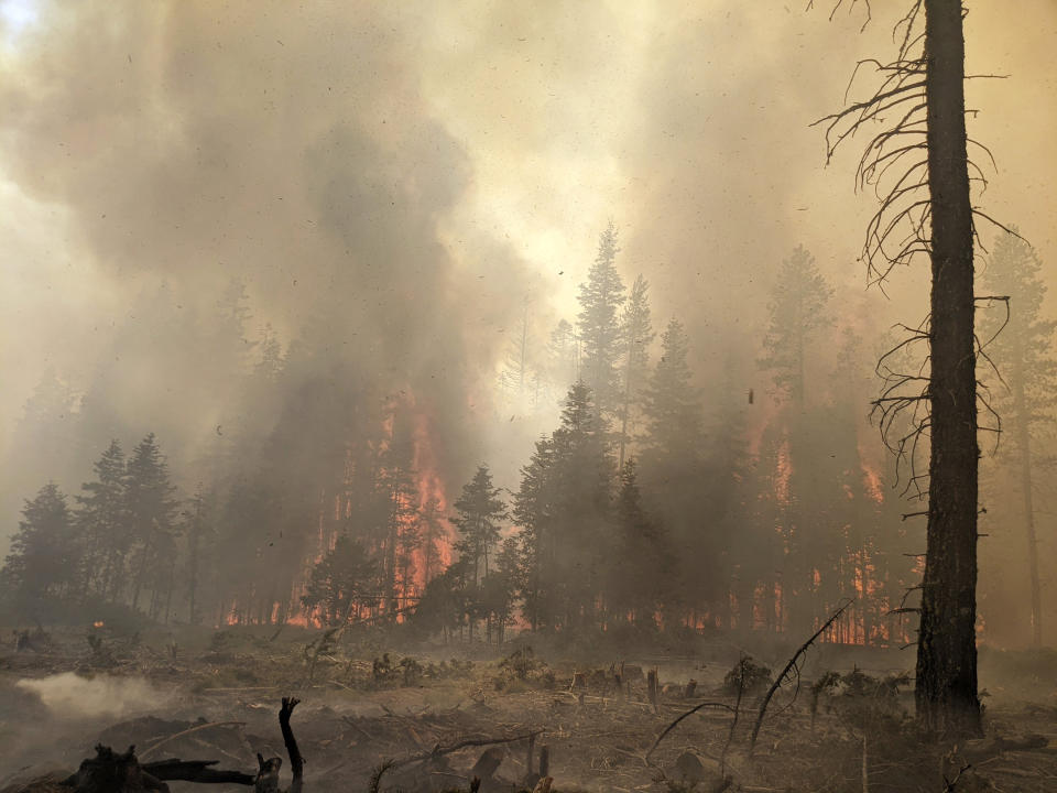 In this photo provided by the Bootleg Fire Incident Command, trees burn at the Bootleg Fire in southern Oregon, Sunday, July 25, 2021. Firefighters reported progress against the nation's largest wildfire, the Bootleg Fire in southern Oregon, containing 46% of the blaze that had consumed nearly 640 square miles (1,657 square kilometers). More than 2,200 firefighters battled the blaze, focusing Sunday on constructing containment lines at the north and eastern edges in dense timber. Crews could get a break from rain and higher humidity predicted for this week, said Marcus Kauffman, spokesman for the Oregon Department of Forestry. (Bootleg Fire Incident Command via AP)