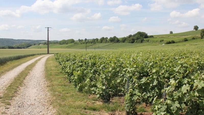 Why champagne grapes could end up as hand sanitiser in France