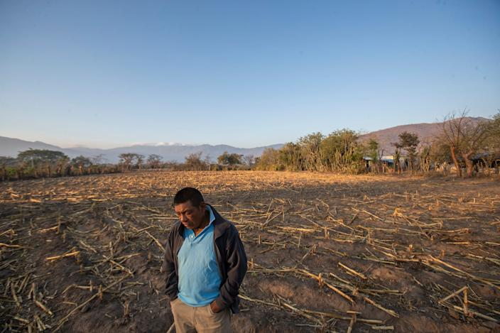 Francisco Sical is photographed on a plot of agricultural land in his Mayan village in March 2020 in Baja Verapaz, Guatemala.