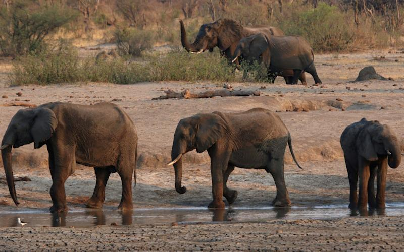 Hwange National Park is home to one of Zimbabwe's largest elephant populations - Reuters