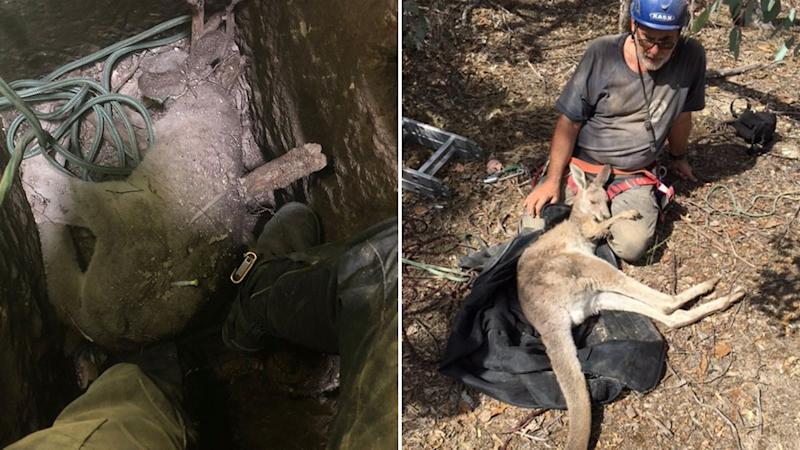 A photo of Manfred Zabinskas, from Five Freedoms Animal Rescue, who collected the kangaroo from the bottom of the shaft and the other photo shows Manfred resting after the rescue with the mother kangaroo.