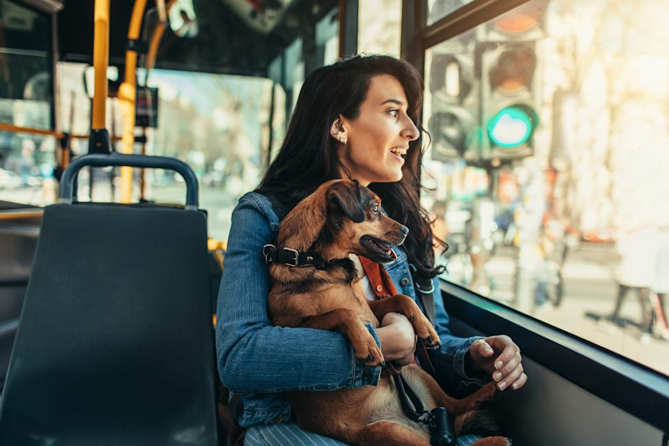 How to prep your pooch to join the daily commute. (Getty Images)