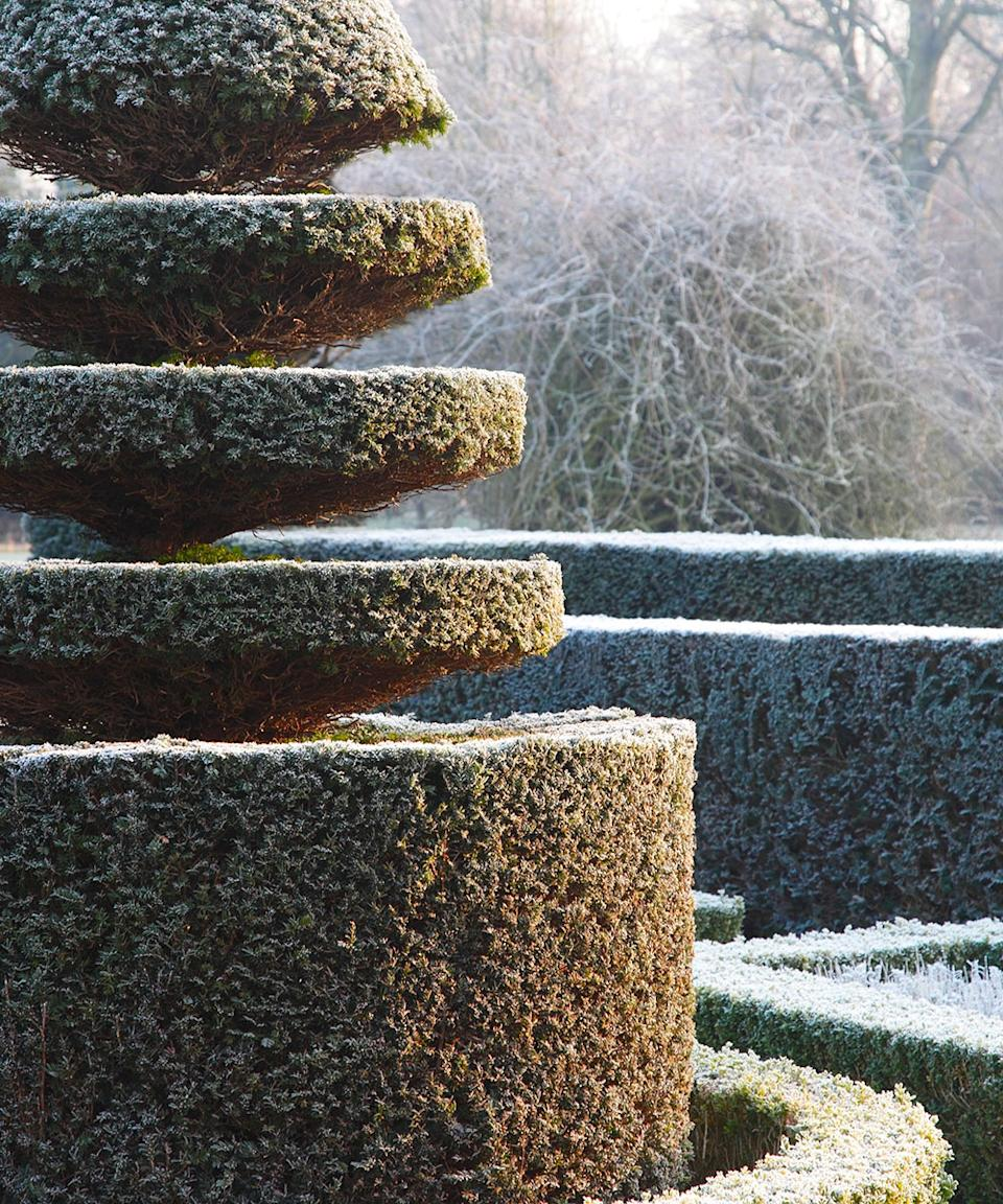 Planning a winter garden: Winter garden ideas and advice