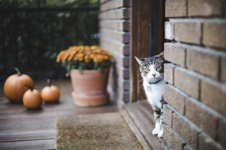 <p>They say black cats will haunt you, but what about this cute tabby cat? </p>