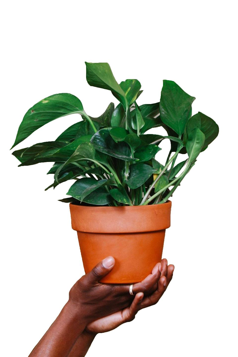 """<p><strong>Grounded Plants</strong></p><p>grounded-plants.com</p><p><strong>$20.00</strong></p><p><a href=""""https://grounded-plants.com/products/golden-pothos"""" rel=""""nofollow noopener"""" target=""""_blank"""" data-ylk=""""slk:Shop Now"""" class=""""link rapid-noclick-resp"""">Shop Now</a></p><p>Give the literal gift of life with a new houseplant—or even <a href=""""https://backtotheroots.com/collections/organic-seeds/products/organic-herb-garden-variety-pack"""" rel=""""nofollow noopener"""" target=""""_blank"""" data-ylk=""""slk:a packet of seeds"""" class=""""link rapid-noclick-resp"""">a packet of seeds</a> for your DIY friend. If the plant ever dies (sad), it can be composted and the pot reused.</p>"""