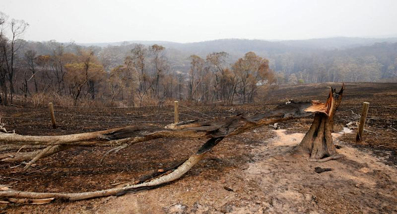Burned bushland in Koorainghat, NSW, on Monday as state faces catastrophic fire danger.