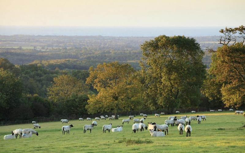 The 'public money for public goods' scheme will replace subsidies under the EU's Common Agricultural Policy - ©National Trust Images/John Miller
