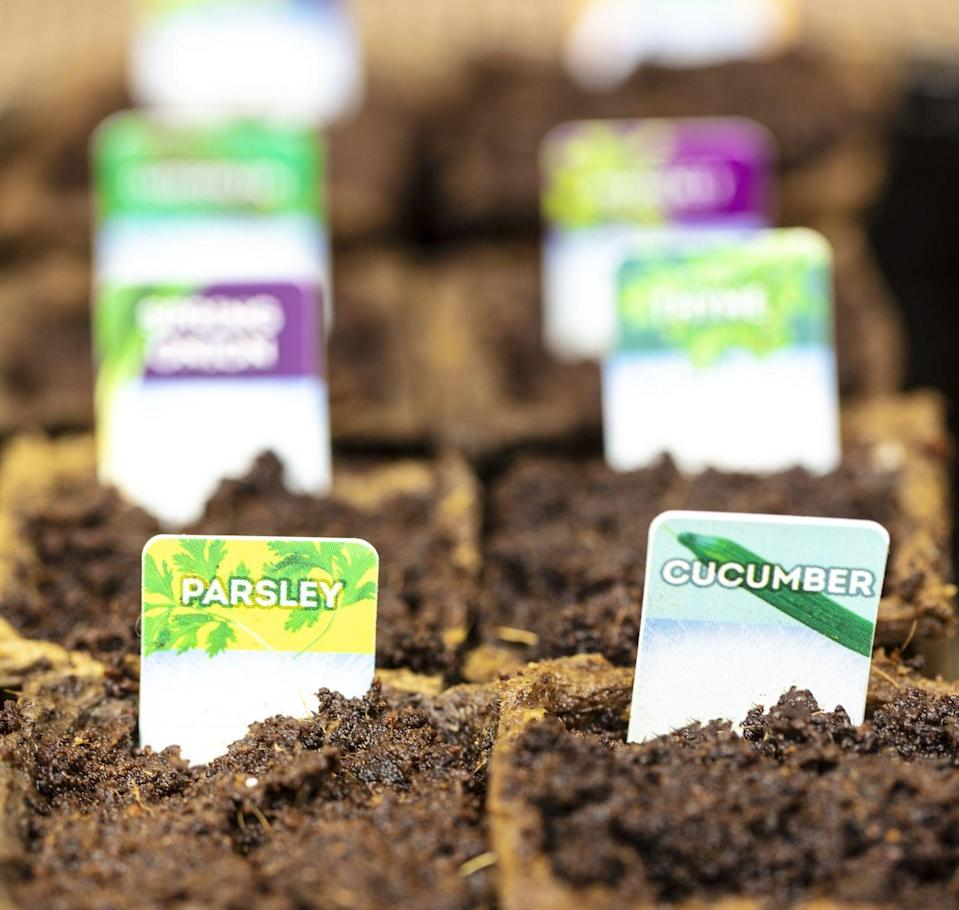 """<p>Without a doubt the cheapest way to get a thriving garden is to sow seeds. Whether it's flower seeds or vegetable seeds, remember to check the seed packet size, as some contain far more seed than you'd be able to sow in a year in the average garden.</p><p>• You can find seeds at garden centres, online retailers like <a href=""""https://go.redirectingat.com?id=127X1599956&url=https%3A%2F%2Fwww.thompson-morgan.com%2F&sref=https%3A%2F%2Fwww.redonline.co.uk%2Finteriors%2Feditors_choice%2Fg35933369%2Fgarden-ideas-on-a-budget%2F"""" rel=""""nofollow noopener"""" target=""""_blank"""" data-ylk=""""slk:Thompson & Morgan"""" class=""""link rapid-noclick-resp"""">Thompson & Morgan</a> or <a href=""""https://go.redirectingat.com?id=127X1599956&url=https%3A%2F%2Fwww.crocus.co.uk%2F&sref=https%3A%2F%2Fwww.redonline.co.uk%2Finteriors%2Feditors_choice%2Fg35933369%2Fgarden-ideas-on-a-budget%2F"""" rel=""""nofollow noopener"""" target=""""_blank"""" data-ylk=""""slk:Crocus"""" class=""""link rapid-noclick-resp"""">Crocus</a>, or home and DIY stores including <a href=""""https://go.redirectingat.com?id=127X1599956&url=https%3A%2F%2Fwww.homebase.co.uk%2Fgarden-outdoor%2Fplants-seeds-bulbs.list&sref=https%3A%2F%2Fwww.redonline.co.uk%2Finteriors%2Feditors_choice%2Fg35933369%2Fgarden-ideas-on-a-budget%2F"""" rel=""""nofollow noopener"""" target=""""_blank"""" data-ylk=""""slk:Homebase"""" class=""""link rapid-noclick-resp"""">Homebase</a>, <a href=""""https://go.redirectingat.com?id=127X1599956&url=https%3A%2F%2Fwww.diy.com%2F&sref=https%3A%2F%2Fwww.redonline.co.uk%2Finteriors%2Feditors_choice%2Fg35933369%2Fgarden-ideas-on-a-budget%2F"""" rel=""""nofollow noopener"""" target=""""_blank"""" data-ylk=""""slk:B&Q"""" class=""""link rapid-noclick-resp"""">B&Q</a> and <a href=""""https://go.redirectingat.com?id=127X1599956&url=https%3A%2F%2Fwww.wilko.com%2F&sref=https%3A%2F%2Fwww.redonline.co.uk%2Finteriors%2Feditors_choice%2Fg35933369%2Fgarden-ideas-on-a-budget%2F"""" rel=""""nofollow noopener"""" target=""""_blank"""" data-ylk=""""slk:Wilko"""" class=""""link rapid-noclick-resp"""">Wilko</a>. You can also try online specialists, <a hr"""