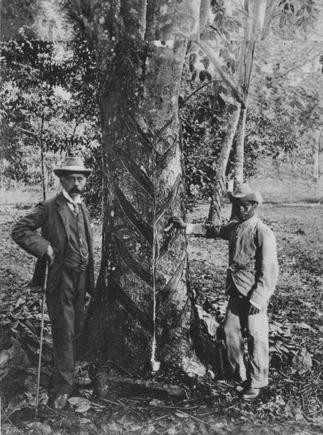 Henry Nicholas Ridley (left) at a rubber plantation in a photo taken before 1987. Photo: Ministry of National Development