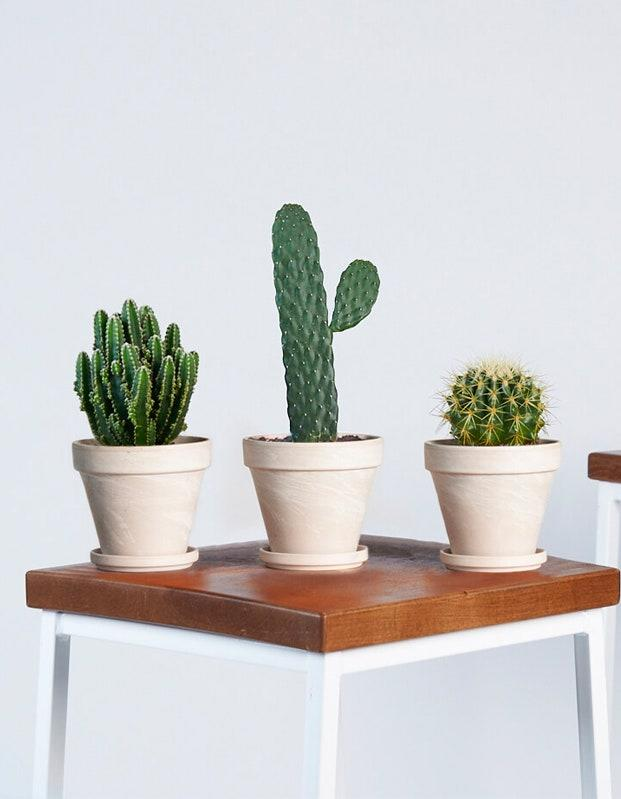 """We never appreciated the outdoors as much, and Bloomscape's latest Mojave collection is everything we need right now. These slow-growing cacti need lots of sun and minimal water, making them a very low-maintenance addition to a desk space <a href=""""https://www.glamour.com/story/best-plants-for-bedroom?mbid=synd_yahoo_rss"""" target=""""_blank"""">(or a bed)</a> by a window. $80, Bloomscape. <a href=""""https://bloomscape.com/product/mojave-collection/"""">Get it now!</a>"""