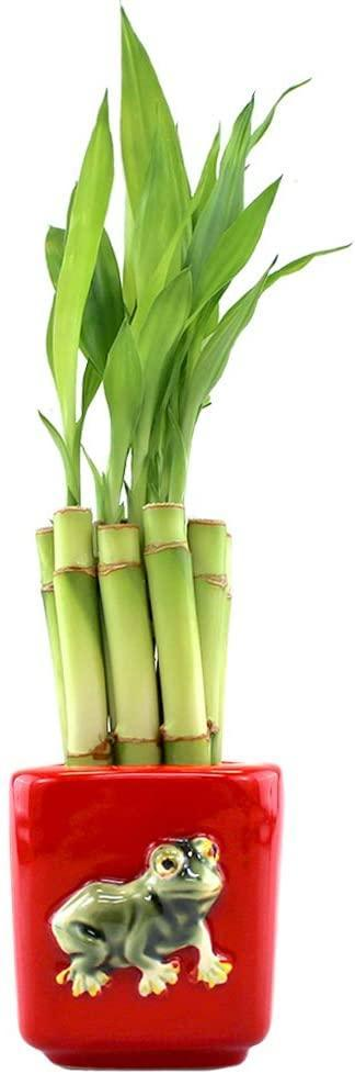 """<strong><h2>NW Wholesaler Live Lucky Bamboo Bundle</h2></strong><br><strong>The Hype: </strong>4.7 out of 5 stars and 583 reviews<br><br><strong>Plant Parents Say:</strong> """"Came perfectly wrapped with wet gel on the bottom to keep them watered. Beautiful condition and still as green as ever. 10 at this price and quality is excellent!""""<br><br><em>Shop</em> <strong><em><a href=""""https://amzn.to/3apozlZ"""" rel=""""nofollow noopener"""" target=""""_blank"""" data-ylk=""""slk:NW Wholesaler"""" class=""""link rapid-noclick-resp"""">NW Wholesaler</a></em></strong><br><br><strong>NW Wholesaler</strong> Live Lucky Bamboo Bundle, $, available at <a href=""""https://amzn.to/37TSa54"""" rel=""""nofollow noopener"""" target=""""_blank"""" data-ylk=""""slk:Amazon"""" class=""""link rapid-noclick-resp"""">Amazon</a>"""