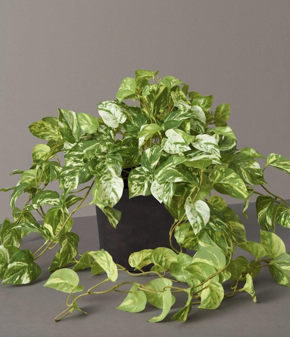 <p>Place this <span>Faux Pothos</span> ($33, originally $40) in the corner of your kitchen or office for a pop of greenery in your space.</p>